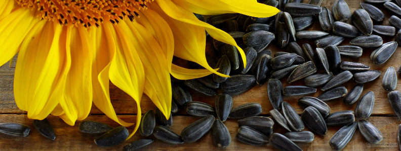 sunflower seeds, loaded with vitamin E